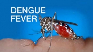 St. Ann seeing fewer cases of Dengue Fever